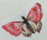 isolatedbutterfly